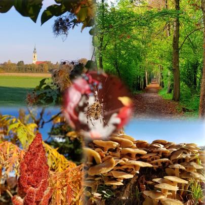 Autumn, Austria