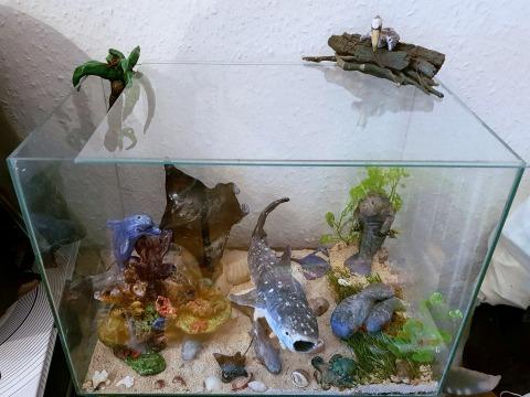 Manta, Whaleshark, Dolphin, Octopus, Turtle, Ray, Fish, Manatee
