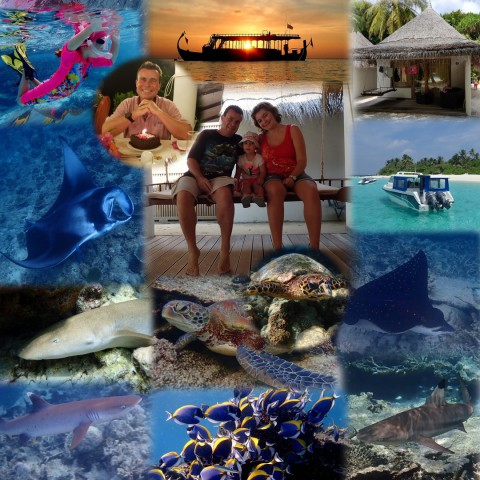 Malediven, Angaga, Ari-Atoll, Mantas, Schnorcheln, Paradies, Urlaub, Riffhaie